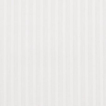コットン×ストライプ(ホワイト)×ブロードジャガード
