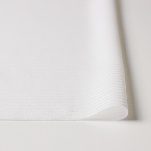 コットン×ボーダー(オフホワイト)×ボイルジャガード イメージ3