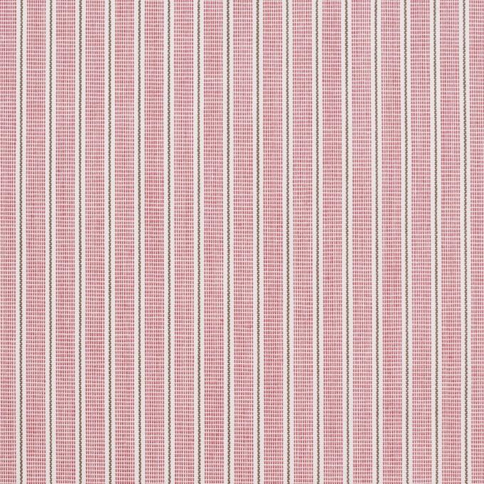 コットン×ストライプ(ローズ)×かわり織 イメージ1