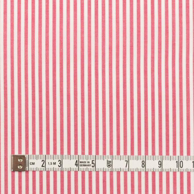 コットン×ストライプ(レッド)×ブロード イメージ4