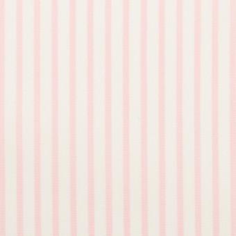 コットン&ポリウレタン×ストライプ(ベビーピンク)×ブロードストレッチ サムネイル1