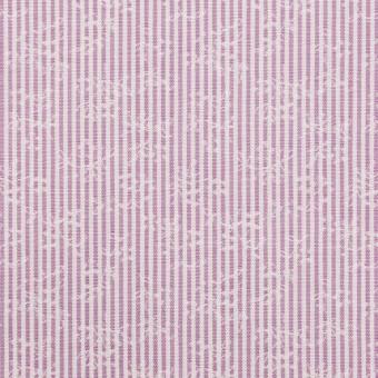 コットン×ストライプ(ラベンダー)×ブロードジャガード_全2色